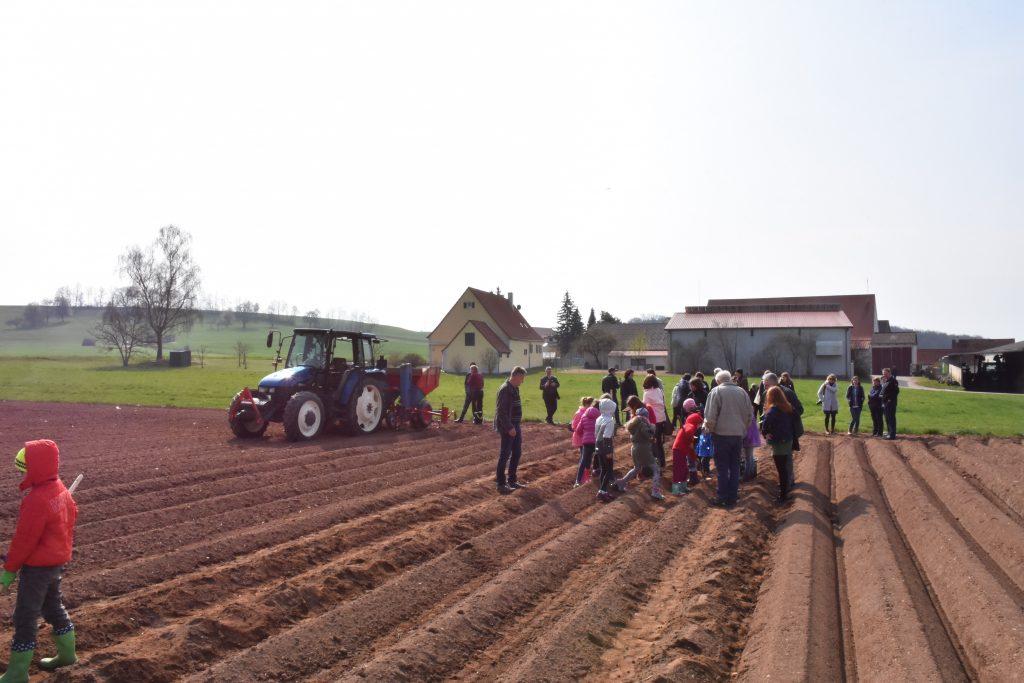 Die Kinder beim Kartoffel legen