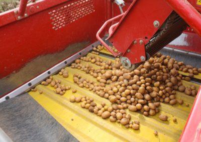 Kartoffelsammelbehaelter